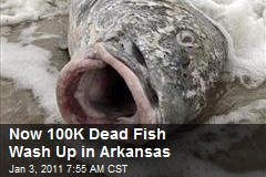 Now 100K Dead Fish Wash Up in Arkansas