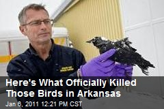 Here's What Officially Killed Those Birds in Arkansas