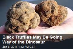 Black Truffles May Be Going Way of the Dinosaur
