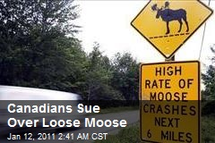Canadians Sue Over Loose Moose