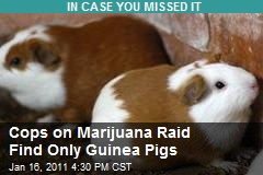 Cops on Marijuana Raid Find Only Guinea Pigs