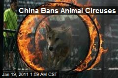 China Bans Animal Circuses