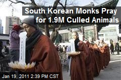 South Korean Monks Pray for 1.9M Culled Animals