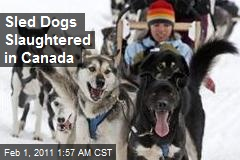 Canada Probes Sled Dog Slaughter