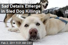 Vigilantes Threaten to Cull Sled Dog Killer