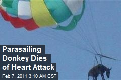 Parasailing Donkey Dies of Heart Attack