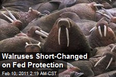 Walruses Short-Changed on Fed Protection