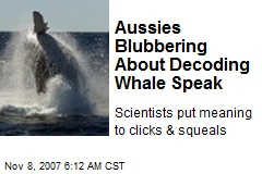 Aussies Blubbering About Decoding Whale Speak