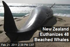 New Zealand Euthanizes 48 Beached Whales