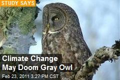Climate Change May Doom Gray Owl