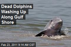 Dead Dolphins Washing Up Along Gulf Shore