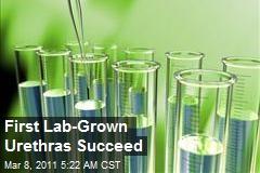First Lab-Grown Urethras Succeed