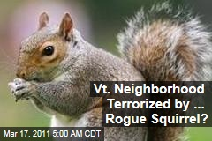 Rogue Squirrel Stalks Bennington, Vermont, Neighborhood