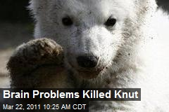 Brain Problems Killed Knut