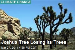 Joshua Tree Losing Its Trees