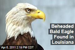 Bald Eagle Beheaded in Louisiana, and Officials Offer $2,000 Reward