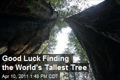 Good Luck Finding the World's Tallest Tree