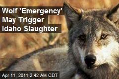 Wolf 'Emergency' May Trigger Idaho Slaughter
