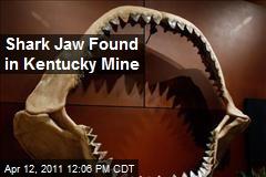 Shark Jaw Found in Kentucky Mine