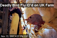 Deadly Bird Flu ID'd on UK Farm
