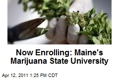 Now Enrolling: Maine's Marijuana State University