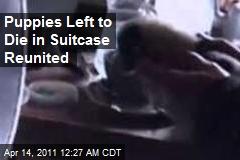 Puppies Left to Die in Suitcase Reunited