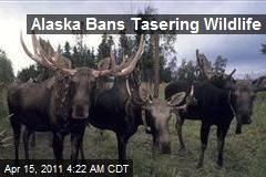 Alaska Bans Tasering Wildlife