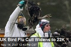 UK Bird Flu Cull Widens to 22K