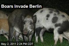 Boars Invade Berlin