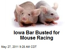 Iowa Bar Busted for Mouse Racing