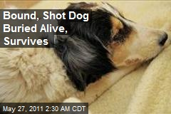 Bound, Shot Dog Buried Alive, Survives