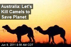 Australia: Let's Kill Camels to Save Planet