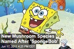 New Mushroom Species Named After 'SpongeBob'