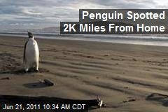 Penguin Spotted 2K Miles From Home