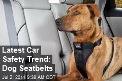 Latest Car Safety Trend: Dog Seatbelts