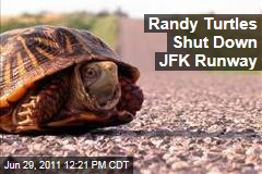 Sex-Crazed Turtles Shut Down JFK Runway