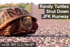 Sex-Crazed Turtles Shut Down JFK Runway