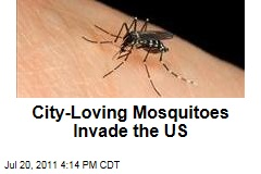 'Urban' Mosquitoes Invade US Cities
