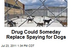Drug Could Someday Replace Spaying for Dogs