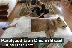 Paralyzed Lion Ariel Dies in Brazil: Famous Male Feline Had Over 62K 'Likes'