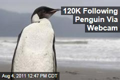 Emperor Penguin, New Zealand: 'Happy Feet' Gathers Online Audience of 120,000