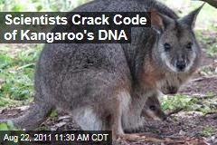 Tammar Wallaby Kangaroo Genome Map Points to Better Antibiotics