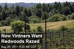 Now Vintners Want Redwoods Razed