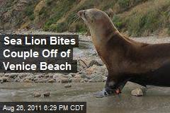 Sea Lion Bites Couple Off of Venice Beach