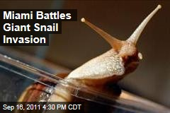 Miami Officials Battle Invasion of Giant African Snails