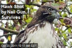 SF Hawk Shot With Nail Gun, Survives