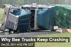 Epidemic Leads to More Bee Trucking, Crashes