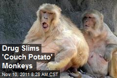 Drug Slims 'Couch Potato' Monkeys