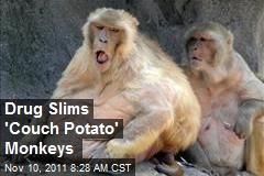 Drug Slims 'Couch Potato' Monkeys