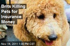 Brits Killing Pets for Insurance Money